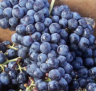 Cabernet Franc - Frozen Grapes Available from Brehm Vineyards