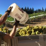 2018 Harvest Stats and Winemaking Recommendations