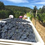 2018 Harvest Preview